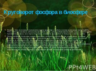 Круговорот фосфора в биосфере Фосфор - один из основных компонентов живого вещес