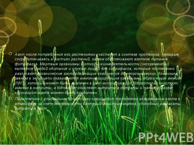 Азот после потребления его растениями участвует в синтезе протеинов, которые, сосредотачиваясь в листьях растений, затем обеспечивают азотное питание фитофагов. Мертвые организмы и отходы жизнедеятельности (экскременты) являются средой обитания и сл…