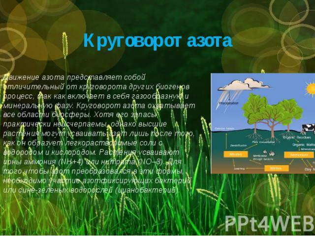 Круговорот азота Движение азота представляет собой отличительный от круговорота других биогенов процесс, так как включает в себя газообразную и минеральную фазу. Круговорот азота охватывает все области биосферы. Хотя его запасы практически неисчерпа…