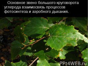 Основное звено большого круговорота углерода взаимосвязь процессов фотосинтеза и