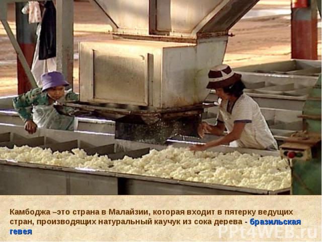 Камбоджа –это страна в Малайзии, которая входит в пятерку ведущих стран, производящих натуральный каучук из сока дерева - бразильская гевея