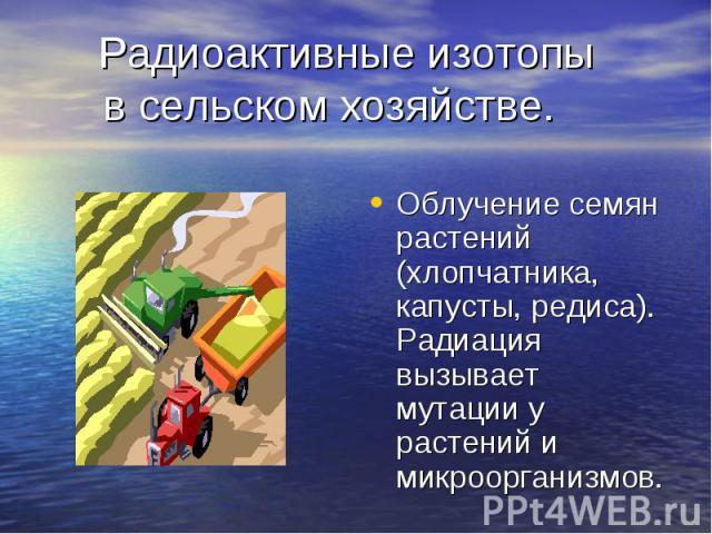 Радиоактивные изотопы в сельском хозяйстве. Облучение семян растений (хлопчатника, капусты, редиса). Радиация вызывает мутации у растений и микроорганизмов.