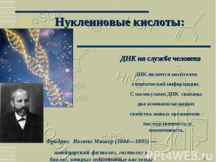 Нуклеиновые кислоты: ДНК на службе человекаДНК является носителем генетической и