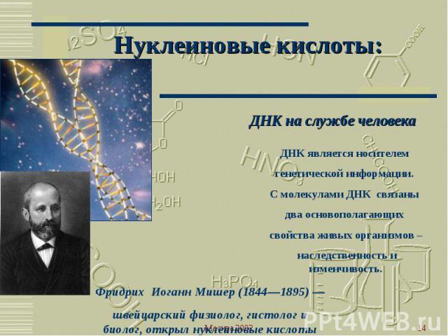 Нуклеиновые кислоты: ДНК на службе человекаДНК является носителем генетической информации. С молекулами ДНК связаны два основополагающих свойства живых организмов – наследственность и изменчивость.Фридрих Иоганн Мишер (1844—1895) — швейцарский физио…