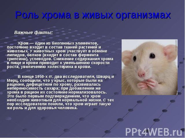 Роль хрома в живых организмах Важные факты:Хром — один из биогенных элементов, постоянно входит в состав тканей растений и животных. У животных хром участвует в обмене липидов, белков (входит в состав фермента трипсина), углеводов. Снижение содержан…