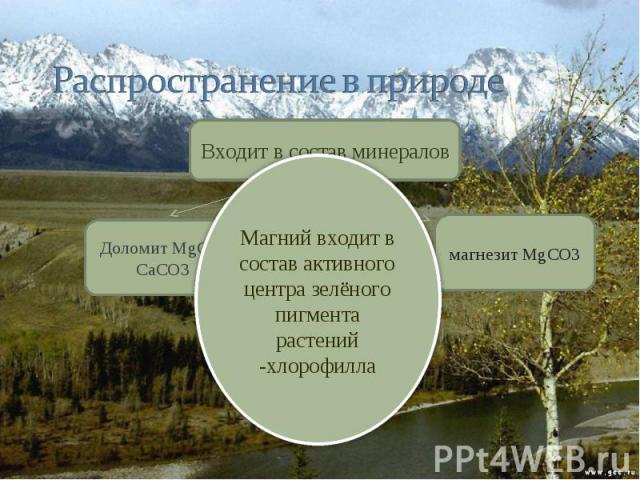Распространение в природе Магний входит в состав активного центра зелёного пигмента растений -хлорофилла