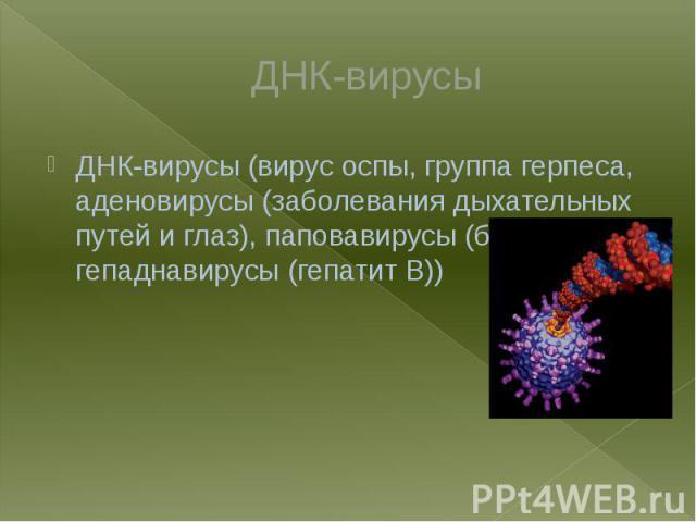 ДНК-вирусы ДНК-вирусы (вирус оспы, группа герпеса, аденовирусы (заболевания дыхательных путей и глаз), паповавирусы (бородавки), гепаднавирусы (гепатит B))