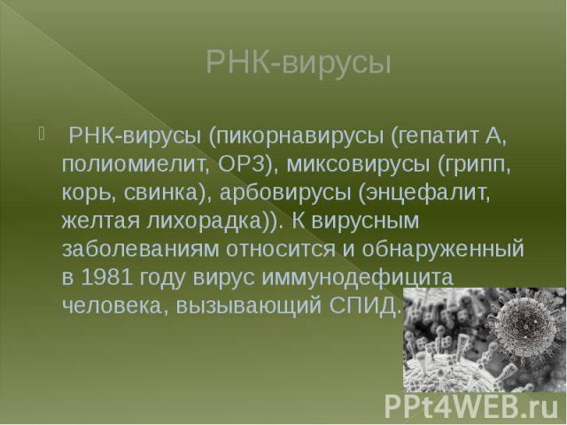 РНК-вирусы РНК-вирусы (пикорнавирусы (гепатит A, полиомиелит, ОРЗ), миксовирусы (грипп, корь, свинка), арбовирусы (энцефалит, желтая лихорадка)). К вирусным заболеваниям относится и обнаруженный в 1981 году вирус иммунодефицита человека, вызывающий СПИД.