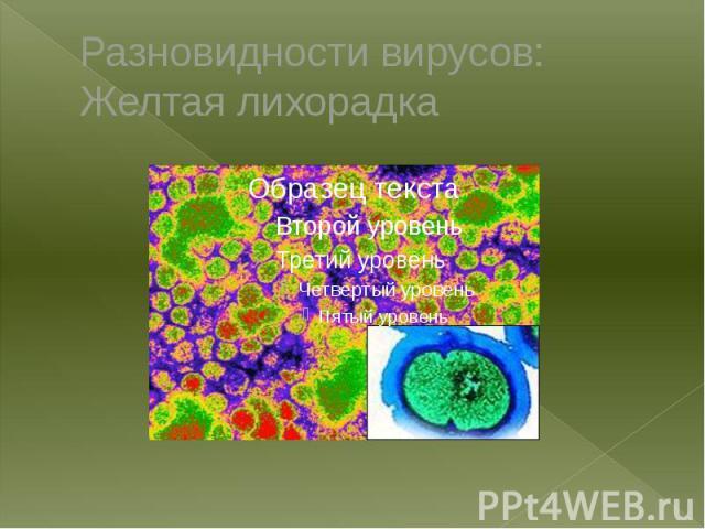 Разновидности вирусов: Желтая лихорадка