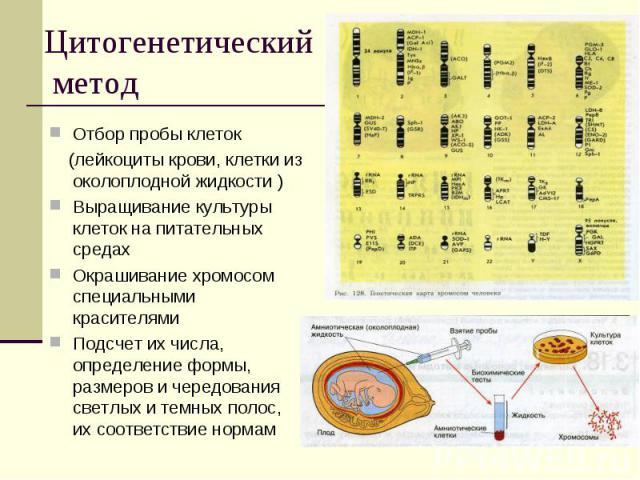 Цитогенетический метод Отбор пробы клеток (лейкоциты крови, клетки из околоплодной жидкости )Выращивание культуры клеток на питательных средахОкрашивание хромосом специальными красителямиПодсчет их числа, определение формы, размеров и чередования св…