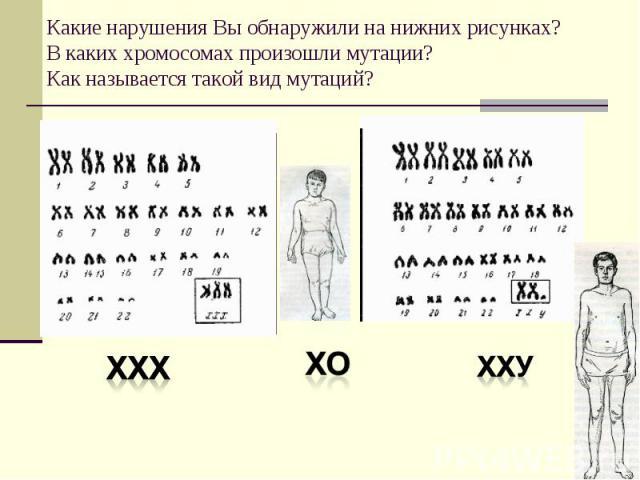 Какие нарушения Вы обнаружили на нижних рисунках? В каких хромосомах произошли мутации? Как называется такой вид мутаций?