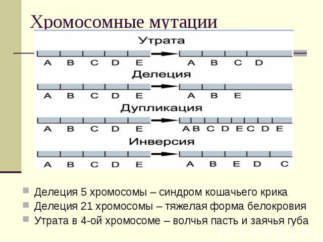 Хромосомные мутации Делеция 5 хромосомы – синдром кошачьего крикаДелеция 21 хромосомы – тяжелая форма белокровияУтрата в 4-ой хромосоме – волчья пасть и заячья губа
