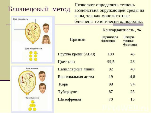 Близнецовый метод Позволяет определить степень воздействия окружающей среды на гены, так как монозиготные близнецы генетически однородны.