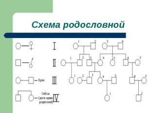 Схема родословной