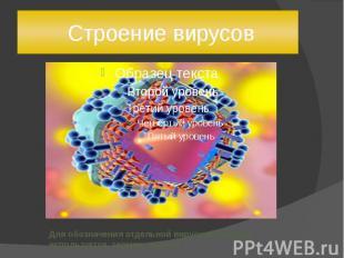 Строение вирусов Для обозначения отдельной вирусной частицы используется термин