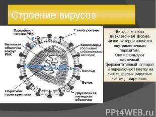 Строение вирусов Вирус – мелкая внеклеточная форма жизни, которая является внутр