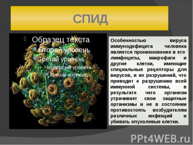 СПИД Особенностью вируса иммунодефицита человека является проникновение в его лимфоциты, макрофаги и другие клетки, имеющие специальные рецепторы для вирусов, и их разрушений, что приводит к разрушению всей иммунной системы, в результате чего органи…