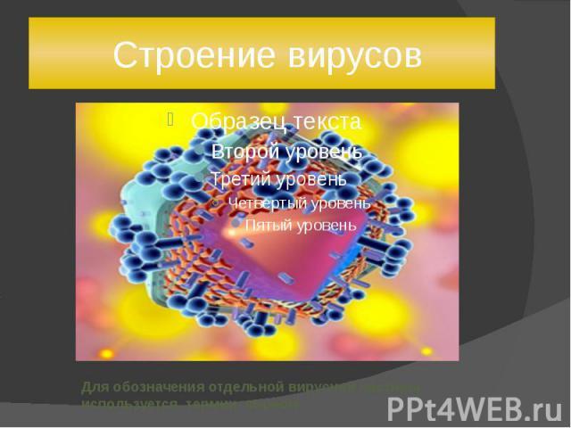 Строение вирусов Для обозначения отдельной вирусной частицы используется термин вирион