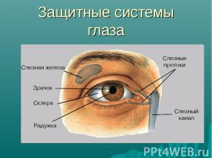 Защитные системы глаза