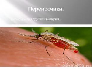 Переносчики. Комары – возбудители малярии.