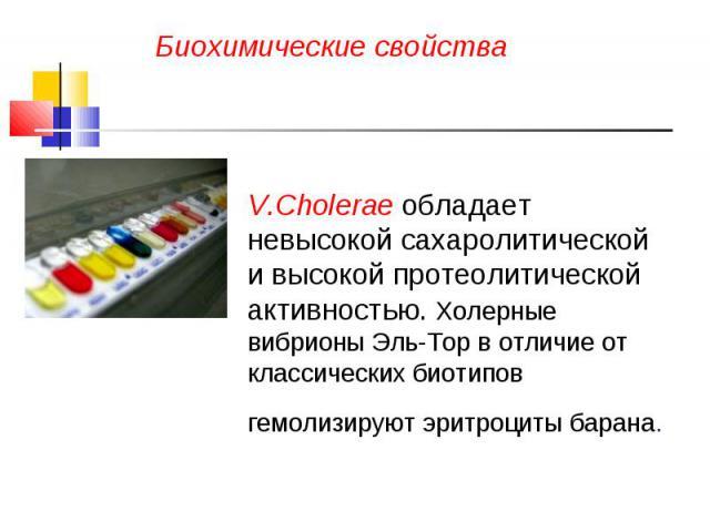 Биохимические свойства V.Cholerae обладает невысокой сахаролитической и высокой протеолитической активностью. Холерные вибрионы Эль-Тор в отличие от классических биотипов гемолизируют эритроциты барана.