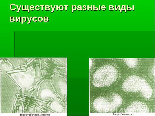 Существуют разные виды вирусов