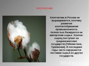 ХЛОПЧАТНИК Хлопчатник в России не выращивается, поэтому развитая хлопчатобумажна