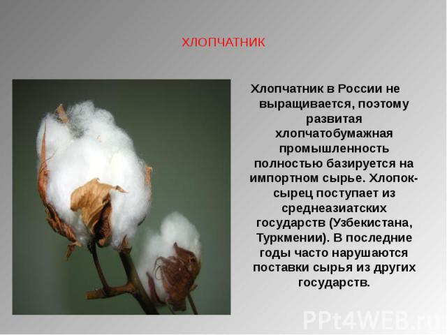 ХЛОПЧАТНИК Хлопчатник в России не выращивается, поэтому развитая хлопчатобумажная промышленность полностью базируется на импортном сырье. Хлопок-сырец поступает из среднеазиатских государств (Узбекистана, Туркмении). В последние годы часто нарушаютс…