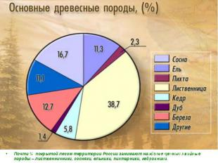 Почти ¾ покрытой лесом территории России занимают наиболее ценные хвойные породы