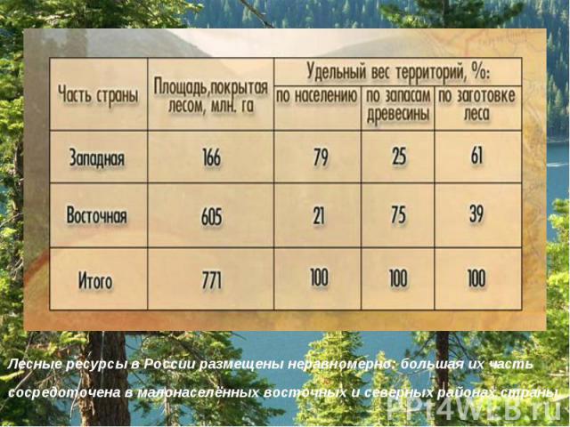 Лесные ресурсы в России размещены неравномерно: большая их часть сосредоточена в малонаселённых восточных и северных районах страны.