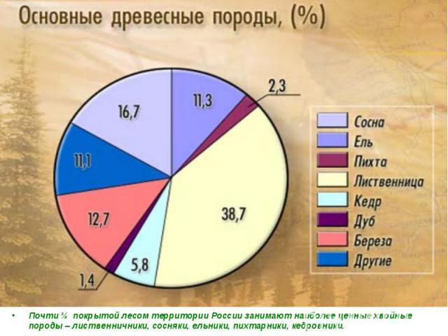 Почти ¾ покрытой лесом территории России занимают наиболее ценные хвойные породы – лиственничники, сосняки, ельники, пихтарники, кедровники.
