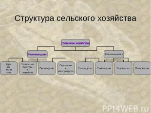 Структура сельского хозяйства