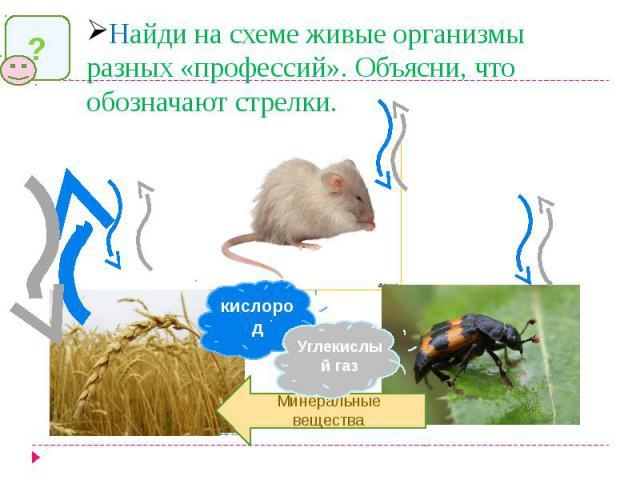 Найди на схеме живые организмы разных «профессий». Объясни, что обозначают стрелки.
