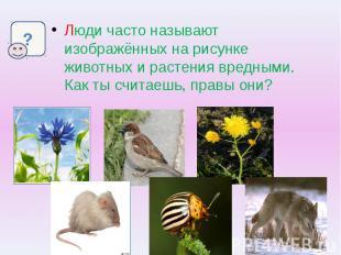 Люди часто называют изображённых на рисунке животных и растения вредными. Как ты