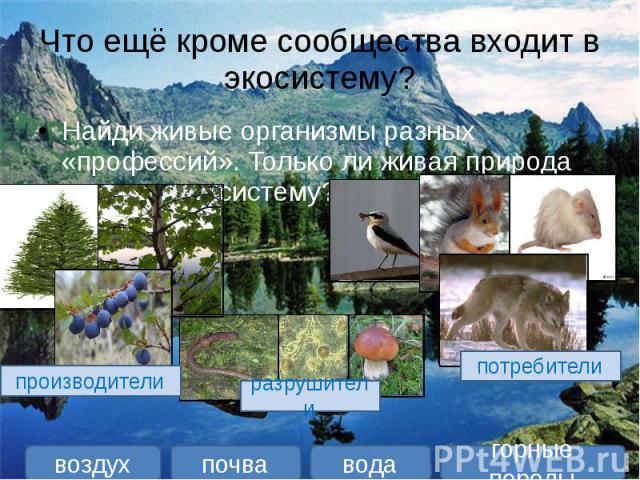 Что ещё кроме сообщества входит в экосистему? Найди живые организмы разных «профессий». Только ли живая природа входит в экосистему?