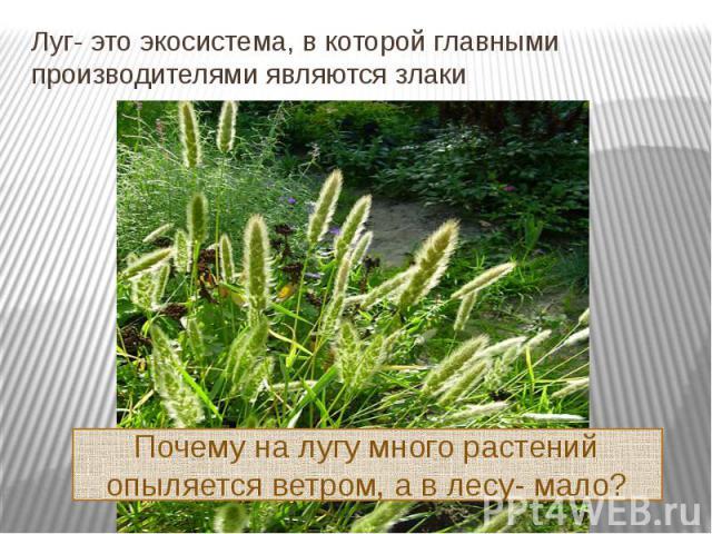 Луг- это экосистема, в которой главными производителями являются злаки Почему на лугу много растений опыляется ветром, а в лесу- мало?
