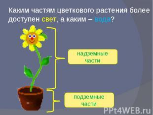 Каким частям цветкового растения более доступен свет, а каким – вода?