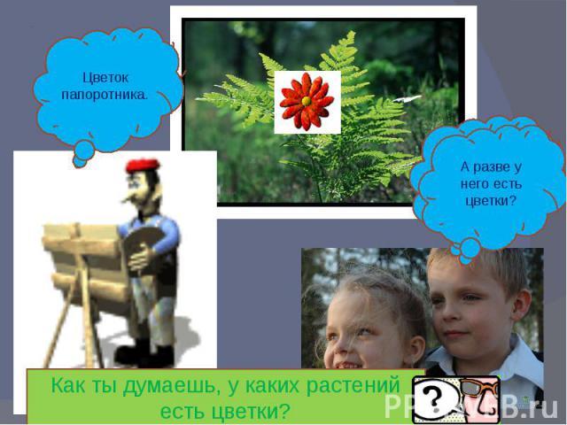 Цветок папоротника.А разве у него есть цветки?Как ты думаешь, у каких растений есть цветки?