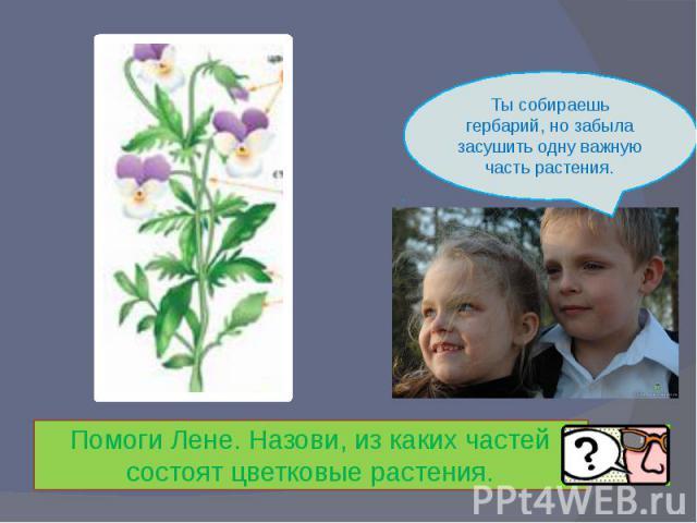 Ты собираешь гербарий, но забыла засушить одну важную часть растения.Помоги Лене. Назови, из каких частей состоят цветковые растения.
