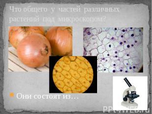 Что общего у частей различных растений под микроскопом? Они состоят из…