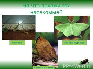 На что похожи эти насекомые?