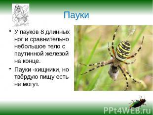 Пауки У пауков 8 длинных ног и сравнительно небольшое тело с паутинной железой н