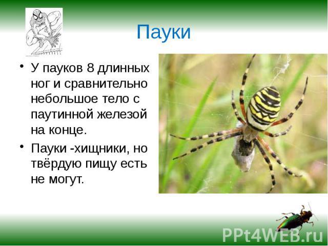 Пауки У пауков 8 длинных ног и сравнительно небольшое тело с паутинной железой на конце.Пауки -хищники, но твёрдую пищу есть не могут.