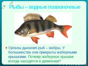 Рыбы – водные позвоночные Органы дыхания рыб – жабры. У большинства они прикрыты