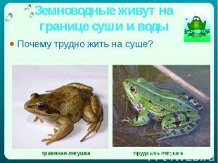 Земноводные живут на границе суши и воды Почему трудно жить на суше?