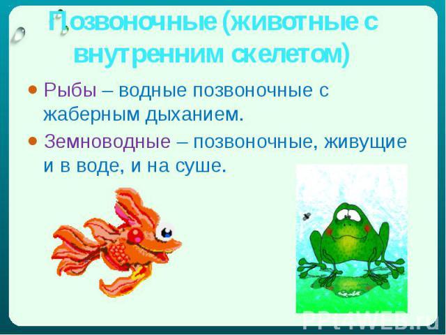 Позвоночные (животные с внутренним скелетом) Рыбы – водные позвоночные с жаберным дыханием.Земноводные – позвоночные, живущие и в воде, и на суше.