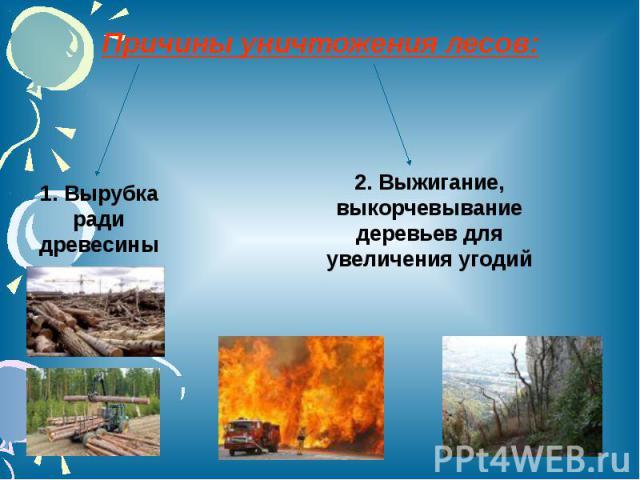 Причины уничтожения лесов: 1. Вырубка ради древесины2. Выжигание, выкорчевывание деревьев для увеличения угодий