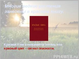Многие редкие растения занесены в красную книгу. Красная Книга называется потому