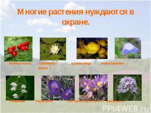 Многие растения нуждаются в охране.