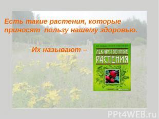 Есть такие растения, которые приносят пользу нашему здоровью. Их называют –